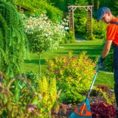 Gardening Luton