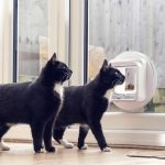 Tips on Creative Cat flap chip