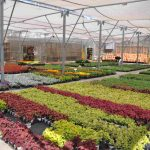 Accumulate and Exchange Your Own Seeds to Save Money in the Garden Center